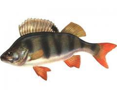 рыбу речную