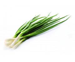 Продам высококачественный зеленый лук
